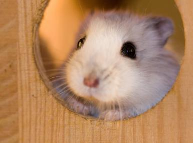 Les diff rentes mod les de cage hamster comparatif - La plus grande cage a hamster du monde ...