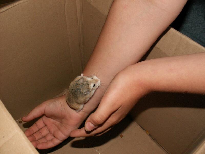 Apprivoiser son hamster 1