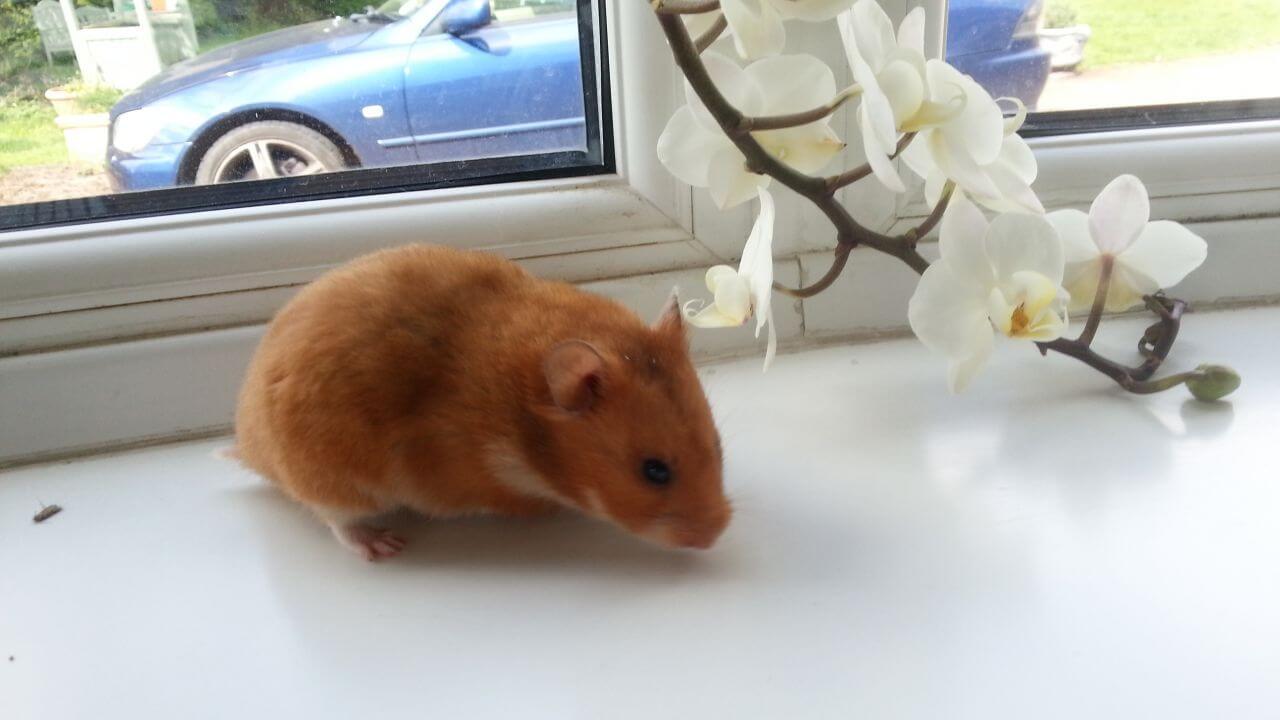 Bien traiter son hamster 1