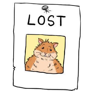 Bien traiter son hamster 4