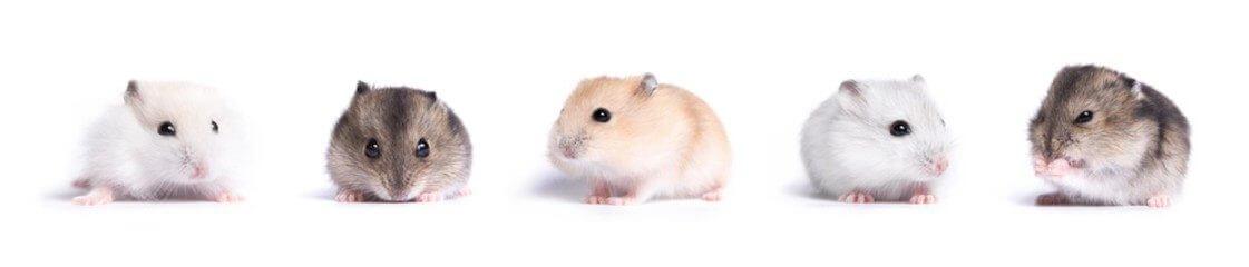 Guide complet du hamster 2