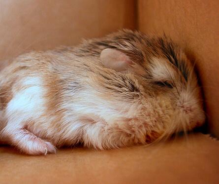 La mort du hamster 2