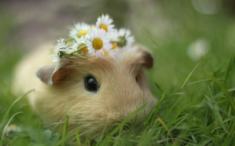 La mort du hamster 3