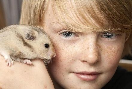 Le hamster est-il fait pour vous 1