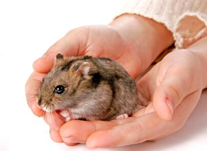 Le hamster est-il fait pour vous 2