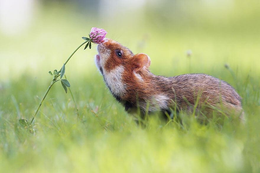 Le langage du hamster 1
