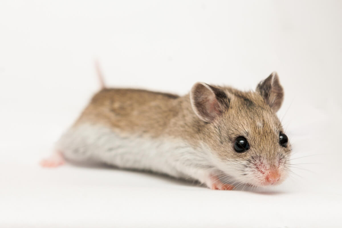 Le langage du hamster 2