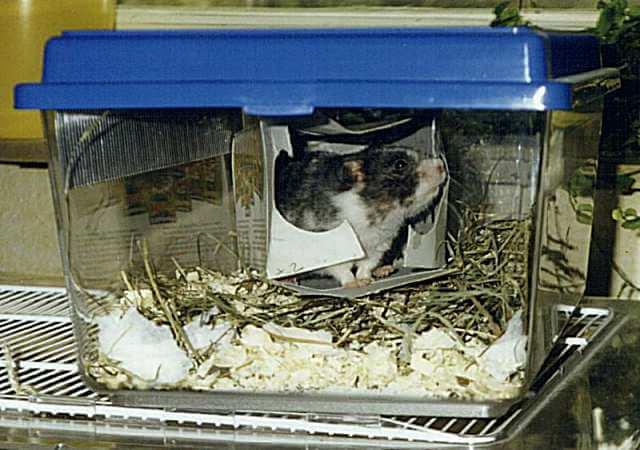 Le transport en cage
