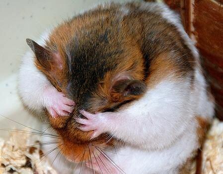 Les occupations préférées des hamster 1