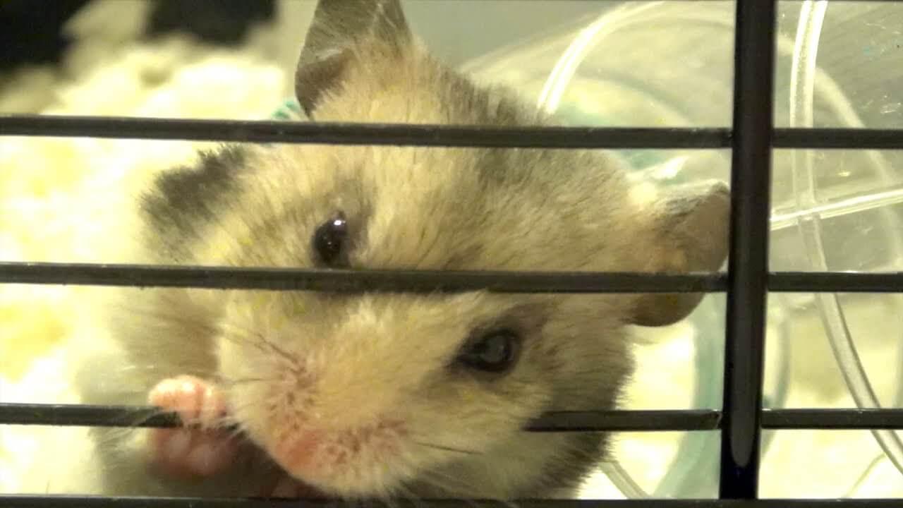 Les occupations préférées des hamster 2