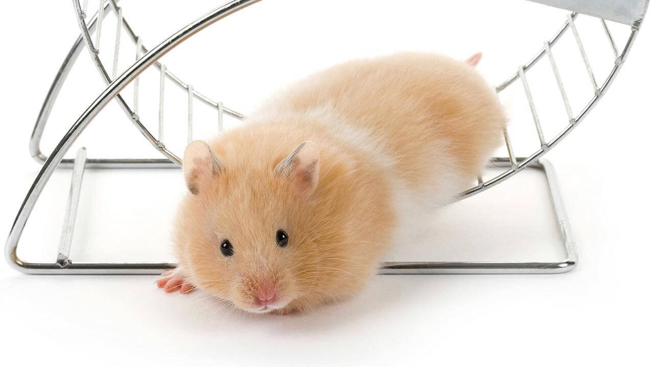 Les occupations préférées des hamster 4
