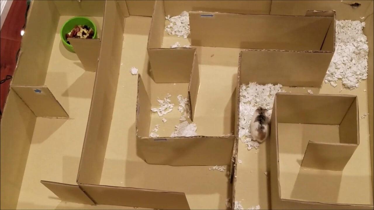 Les occupations préférées des hamster 5