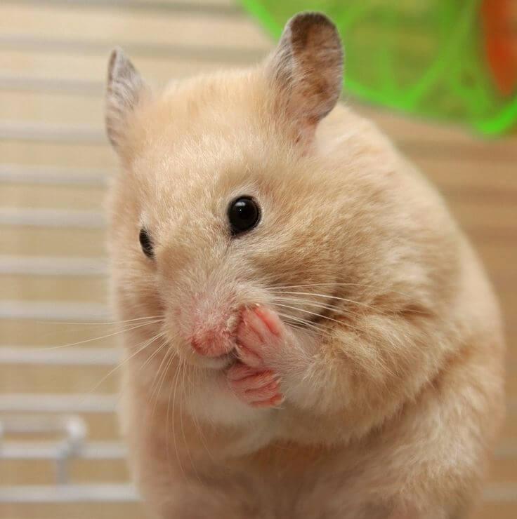 Les occupations préférées des hamster 6