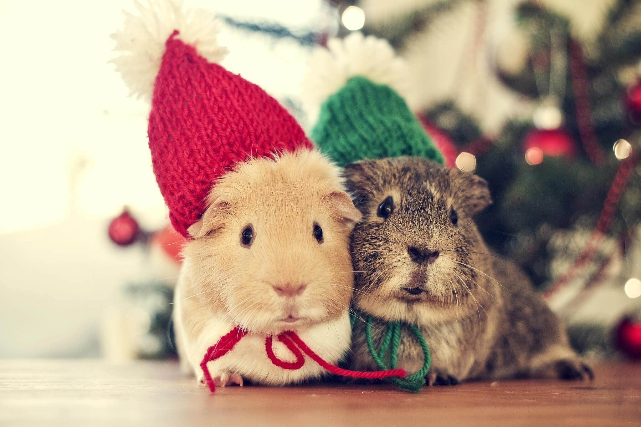 Que faire du hamster pendant les vacances 2