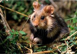 le grand hamster 2