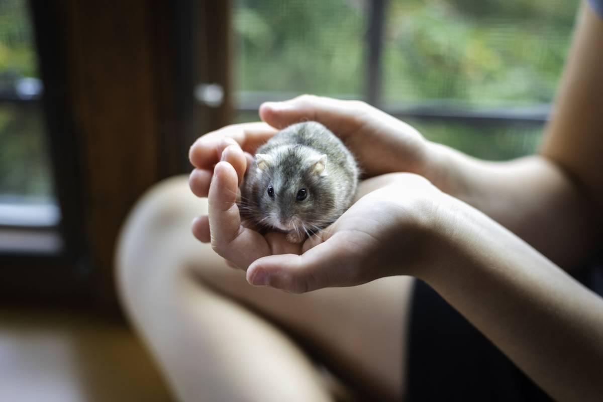 NAC : soins et hygiène des nouveaux animaux de compagnie