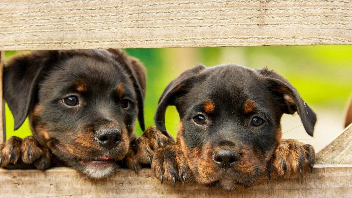 Offrez des croquettes qualitatives made in France à votre chien et votre chat