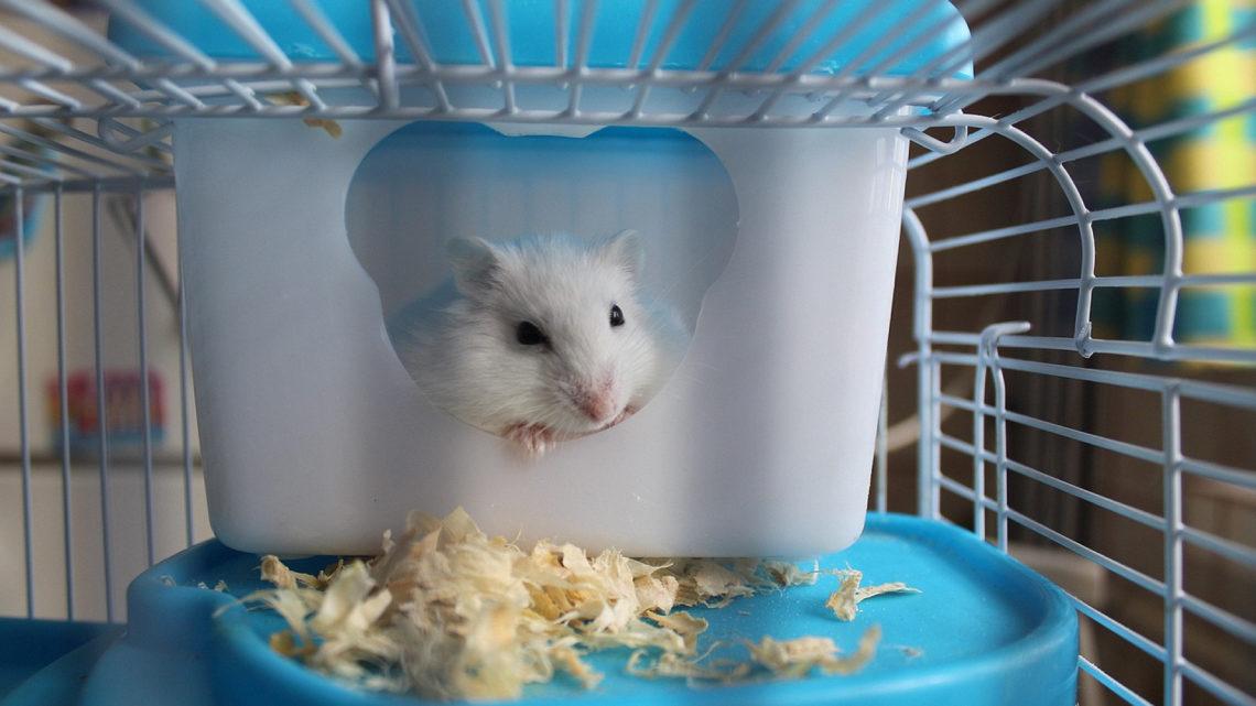 Comment choisir sa cage pour hamster ?